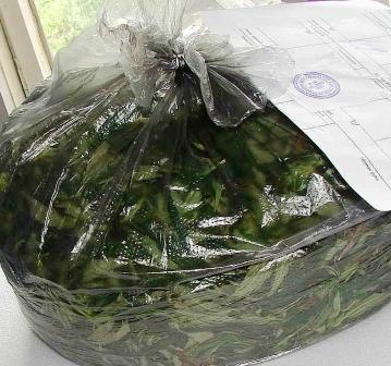 У жителя селения Гизель нашли два килограмма марихуаны