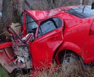 Водитель врезался в дерево, но остался жив