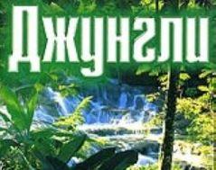 Во Владикавказе руководителя ООО «Джунгли» будут судить за фальсификацию документов