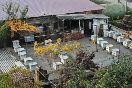 Сходил к родственникам – и для меня открылся чудесный вид: на крыше гаража, какой-то умелец завел пасеку! Городская пасека – это гениально!