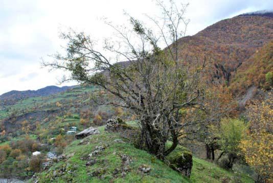 Допустим, это корявое дерево, скорее, даже куст, но он шикарно отражает действительность, точнее альтернативную реальность гор.