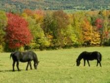 Во Владикавказе у гостя из Дагестана угнали «Жигули», а под Моздоком украли лошадь