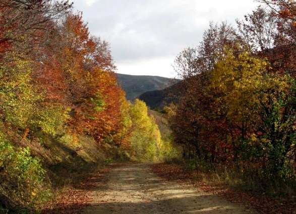 Autumn_road_to-Tson_vilage1-1