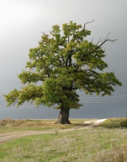 Дерево-у-Дзагина