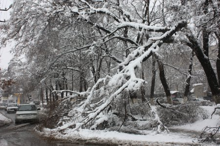 Апрельская зима стала испытанием для всех служб Владикавказа