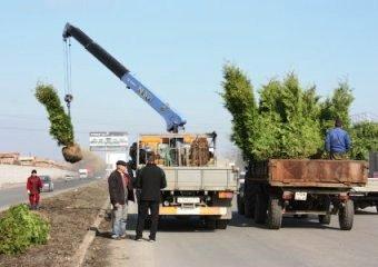 Владикавказ обретает новый зеленый наряд