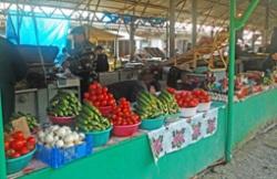 Огурцы из станицы Луковская пополнили рынок в Моздоке