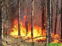 Беспечность и хорошая погода в Северной Осетии помогли пожару