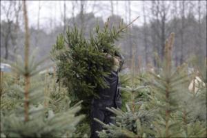 Срубил незаконно елки – подарил себе суд на Новый год