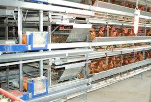 Почему закрываются птицефермы?