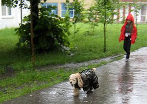 За один день во Владикавказе выпала почти полумесячная норма осадков
