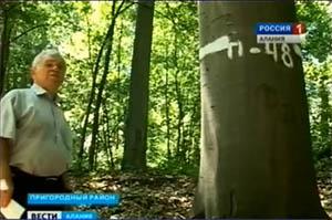 В Северной Осетии возобновят популяцию элитного красного дуба