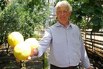 В Осетии испытывают морозостойкую хурму
