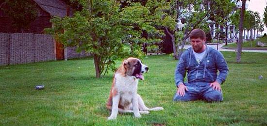 Сбежавший от Рамзана КАДЫРОВА любимый пес Тарзан нашелся в Ингушетии