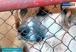 Во Владикавказе работает собачий питомник