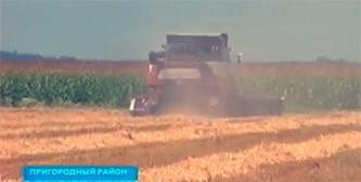 Аграрии Северной Осетии планируют засеять 50 тысяч гектаров озимых