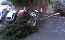В столице Северной Осетии дерево упало на припаркованные автомобили