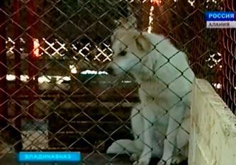 Во Владикавказе бездомных собак не столько отлавливают, сколько убивают